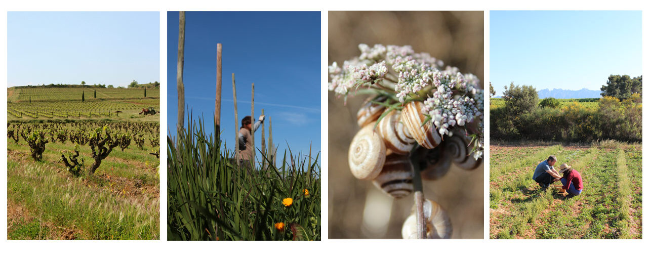 Celler Credo - Impressions from the vineyard