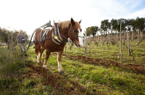 recaredo cellercredo plowing with horse
