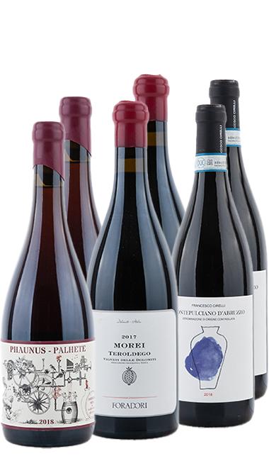 Amphoren Wein Rot Probierpaket