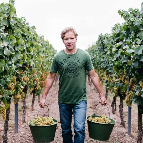 michael andres in the vineyard