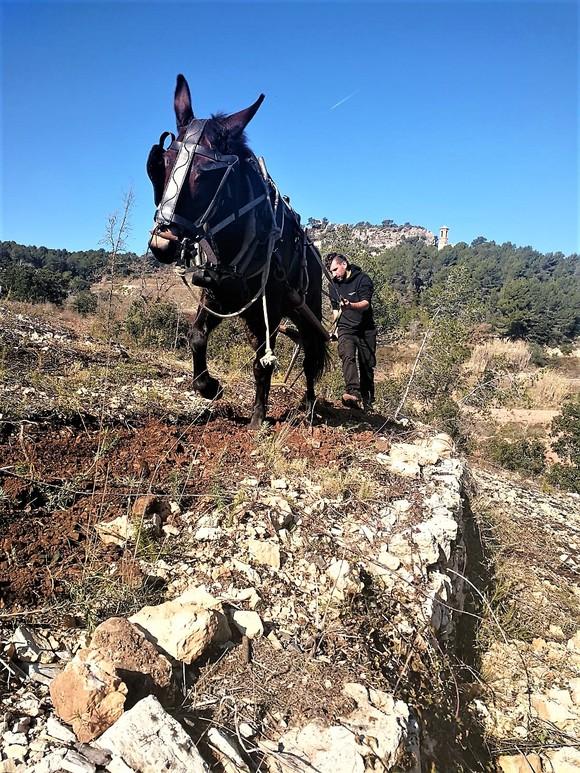 Pflügen mit Pferd bei Nin Ortiz