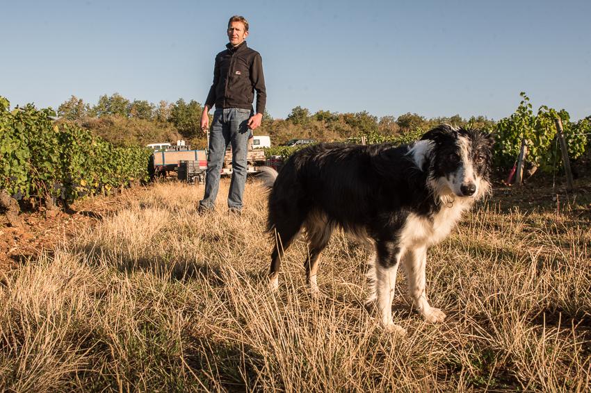 boris champy in vineyard with dog