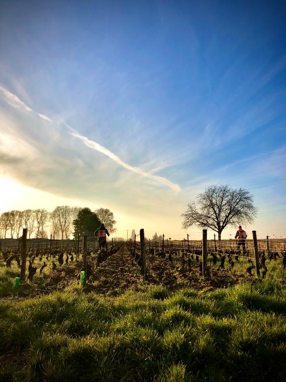 Vineyards of Domaine Rougeot in Meursault